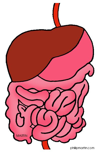 399x637 Collection Of Digestive System Clipart High Quality, Free