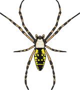 160x180 Free Spider Clipart