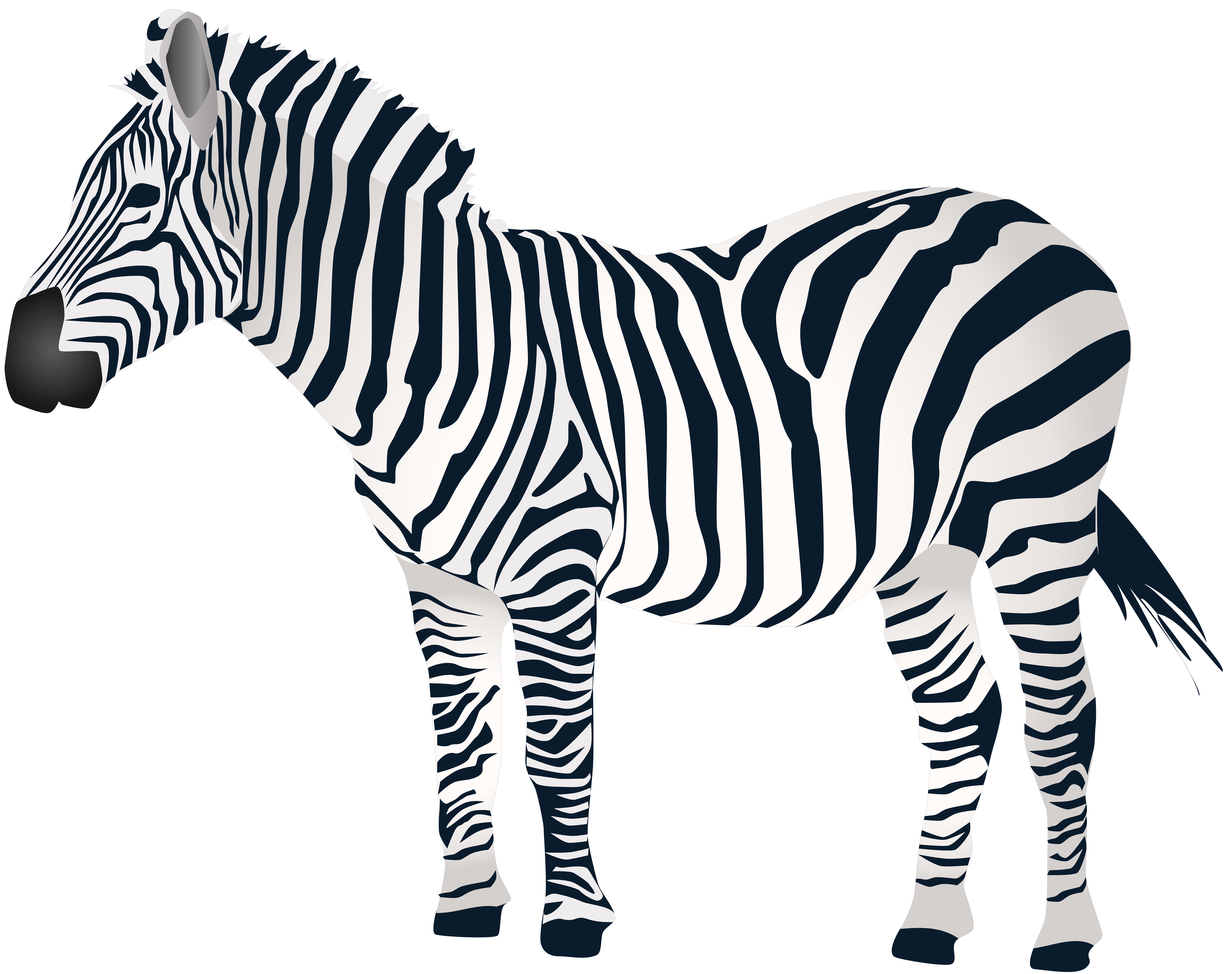 Free Zebra Clipart At GetDrawings.com