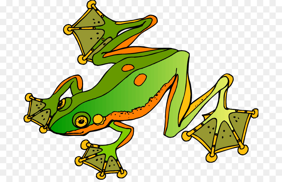 900x580 Poison Dart Frog Clip Art