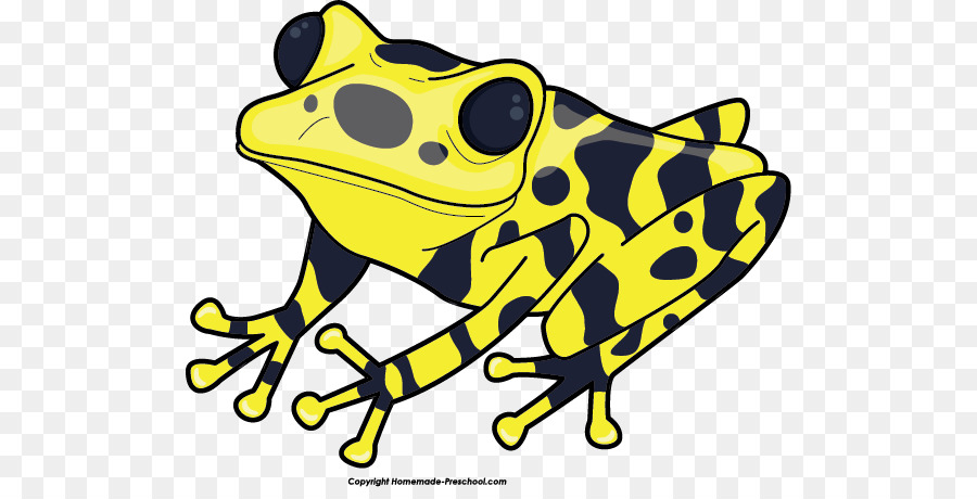 900x460 Yellow Banded Poison Dart Frog Green And Black Poison Dart Frog