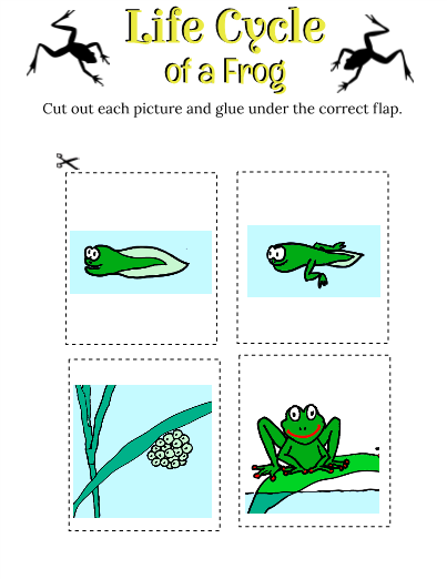 403x522 Frog Life Cycle Interactive Notebook