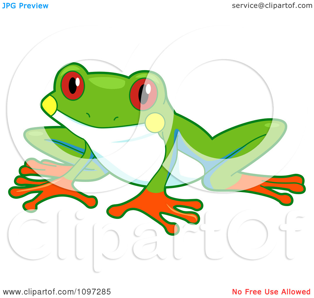 1080x1024 Red Eyed Tree Frog Clipart Black And White