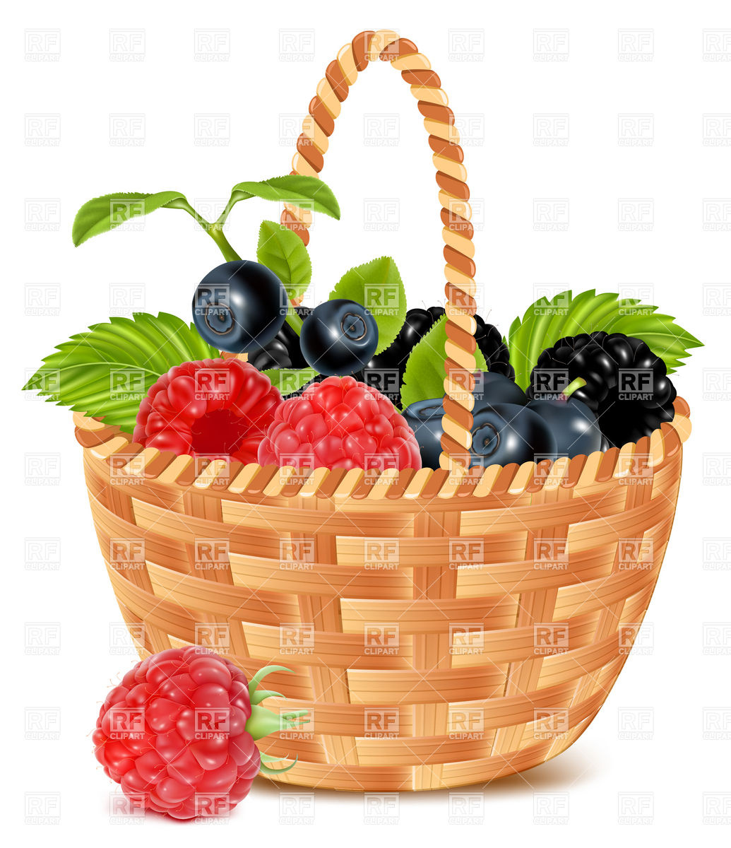 1035x1200 Ripe Forest Berries In The Basket Vector Image Vector Artwork