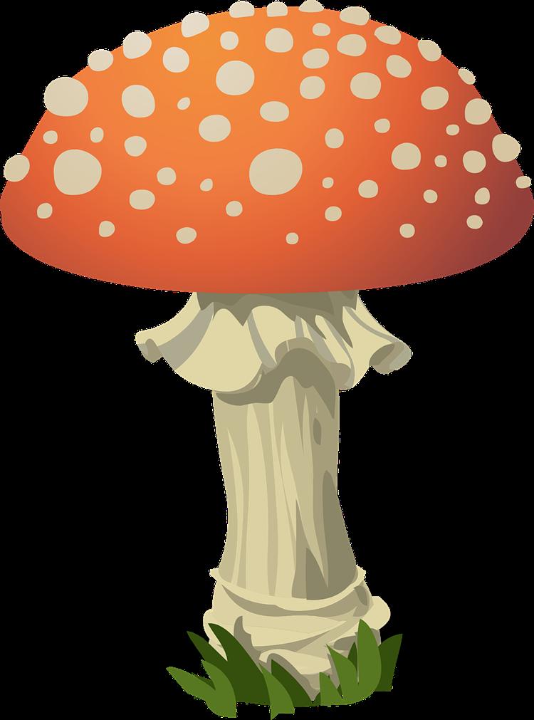 750x1011 Mushroom Free To Use Clip Art 6