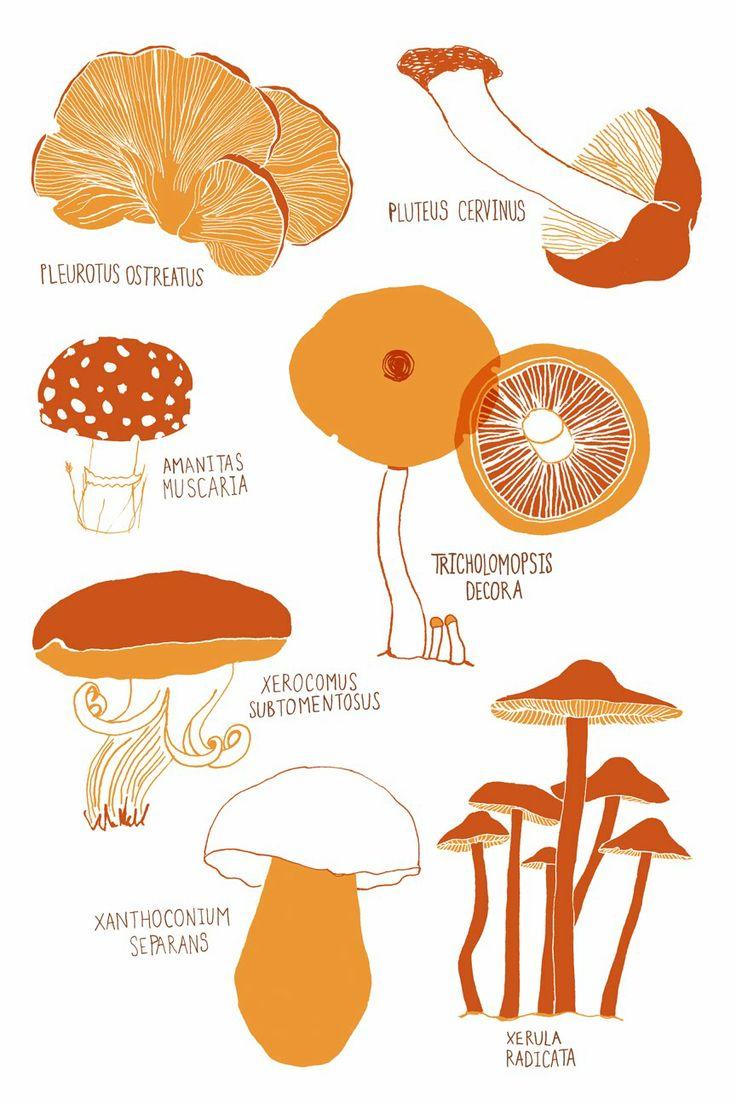 736x1104 Screen Fungus Clipart