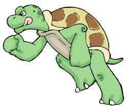 250x217 Turtles