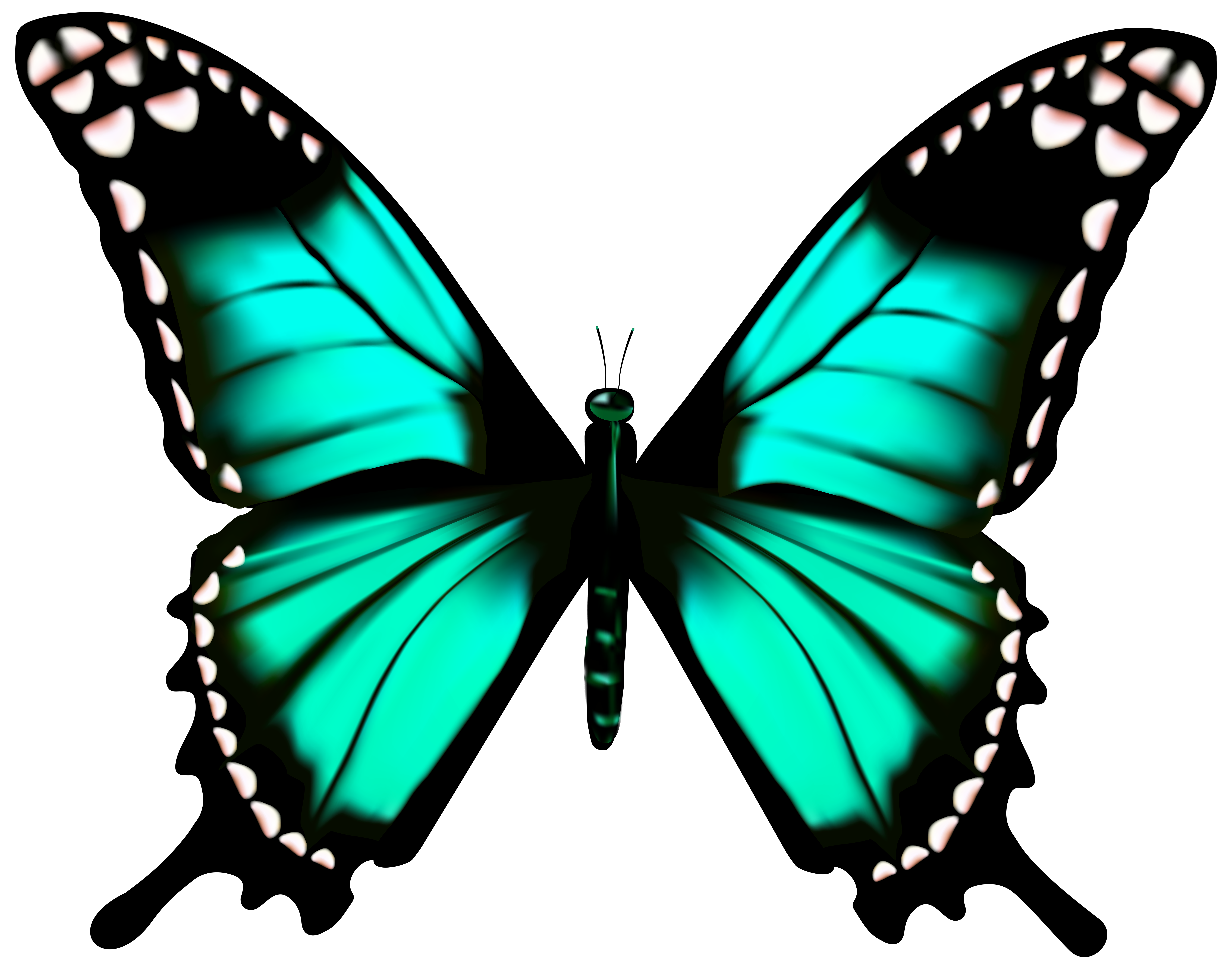 7000x5503 Butterfly Transparent Png Clip Art Imageu200b Gallery Yopriceville