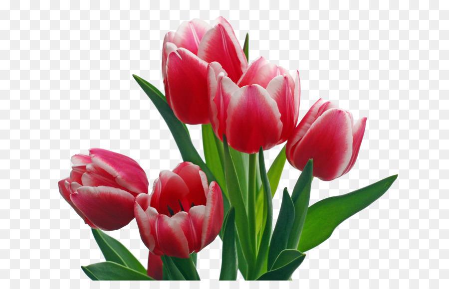 900x580 Indira Gandhi Memorial Tulip Garden Pink Flowers Clip Art