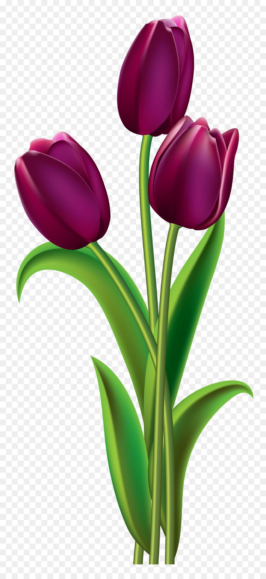 900x1960 Indira Gandhi Memorial Tulip Garden Red Clip Art