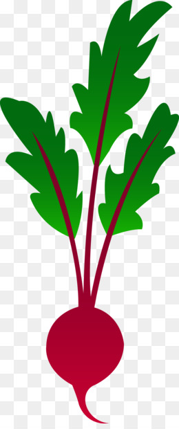 260x620 Free Download Beetroot Vegetable Clip Art