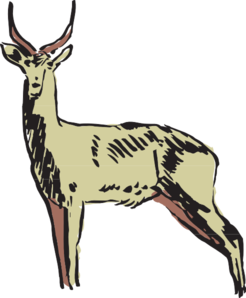 246x298 Green Antelope Drawing Clip Art