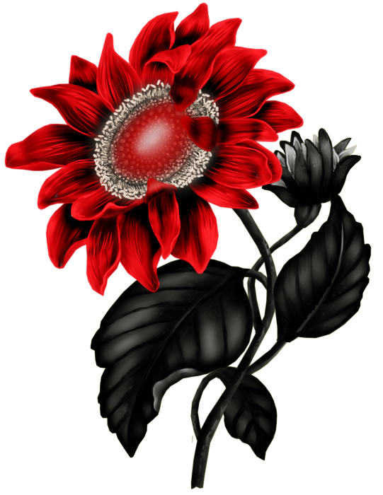 541x700 Flowers, Flores, Flowers, Bloemen, Png Clip Art Flowers And Rock