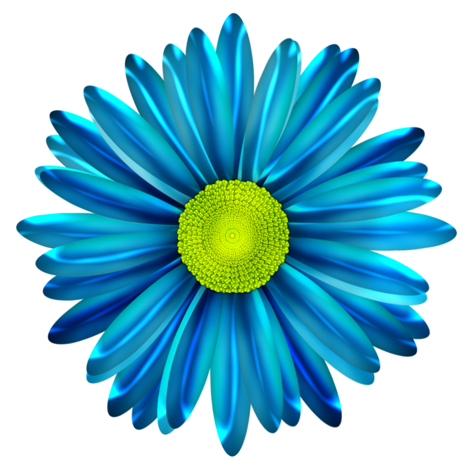Gerber Daisy Clipart at GetDrawings | Free download