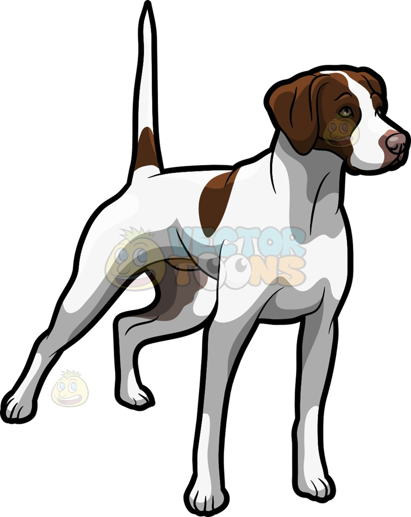 German Shorthaired Pointer Clipart At Getdrawings Com Free For Personal Use German Shorthaired