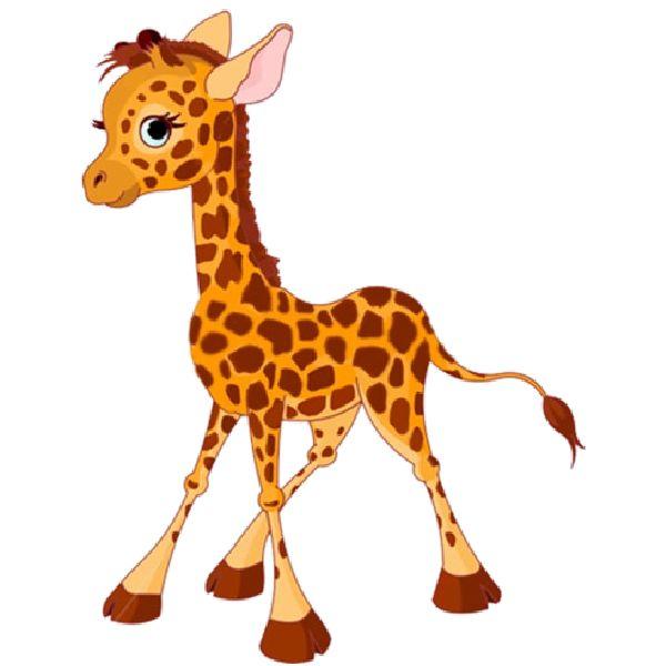 600x600 34 Best Giraffe Images On Giraffes, Baby Giraffes