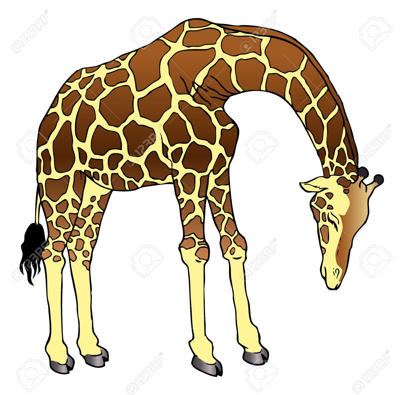 1300x1271 Cartoon Drawing Of A Giraffe Cartoon Giraffe Clipart Free