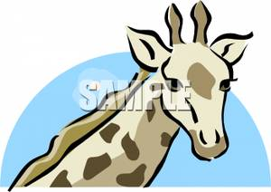 300x212 The Head Of A Young Giraffe Clipart Picture