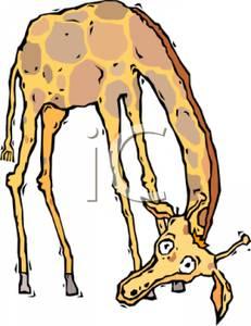 231x300 Cartoon Giraffe With Its Head Bent Low