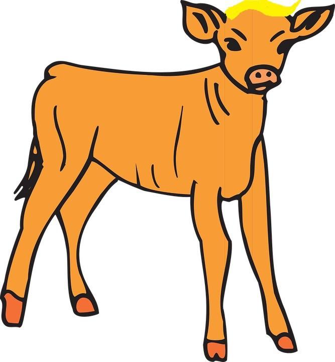 667x720 The Orange Calf John Knox Medium