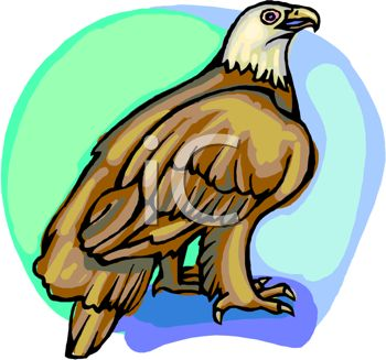 350x327 Picture Of A Bald Eagle Standing On A Perch With A Blue Background
