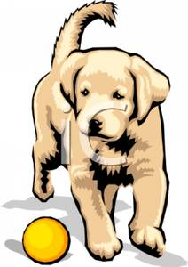 212x300 Puppy Clipart Yellow Lab 3825364