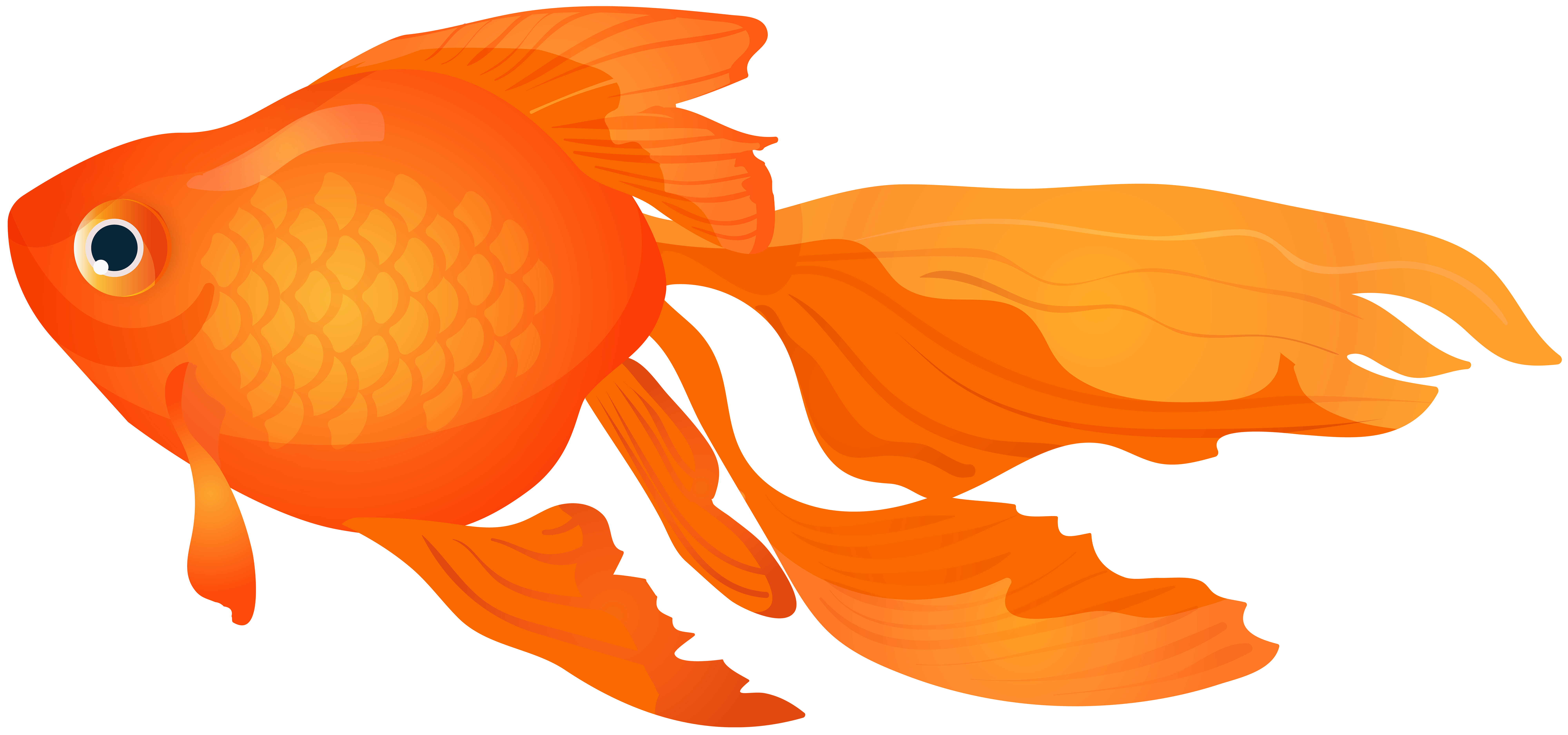 Goldfish Clipart At Getdrawings