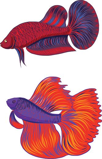 333x516 Siamese Fighting Fish Clip Art, Vector Images Amp Illustrations