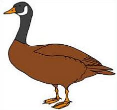 235x221 Stunning Idea Goose Clipart File 01 Svg Wikimedia Commons