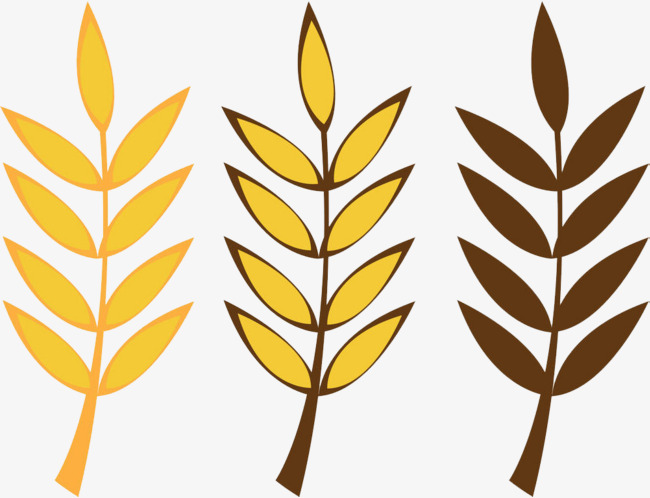 650x498 Grains Of Wheat, Wheat, Botany, Grain Png Image And Clipart