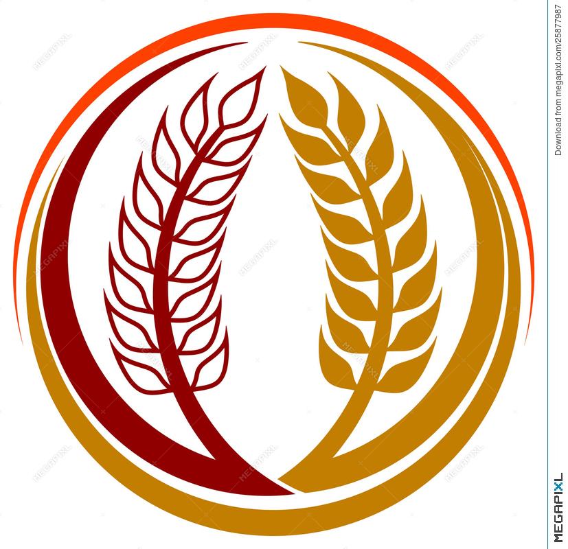 827x800 Wheat Grains Logo Illustration 25877987