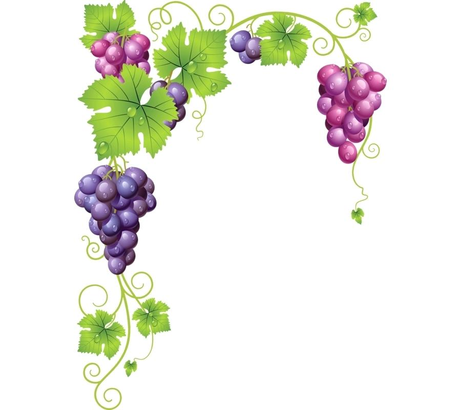 900x800 Grape Vine Art Common Grape Vine Wine Clip Art Grape
