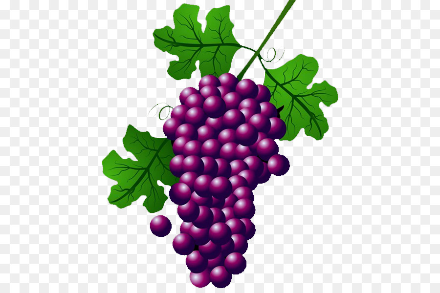 900x600 Wine Common Grape Vine Concord Grape Clip Art