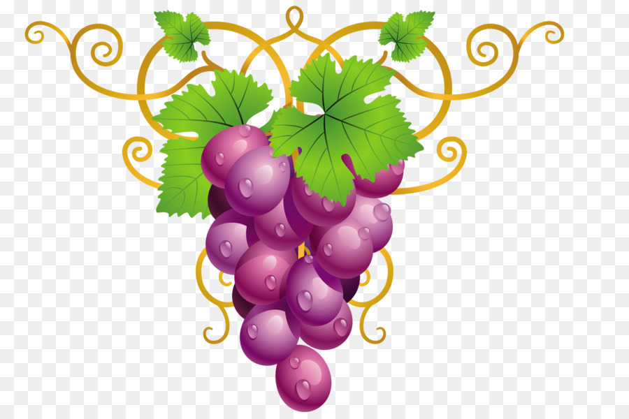 900x600 Common Grape Vine Wine Clip Art