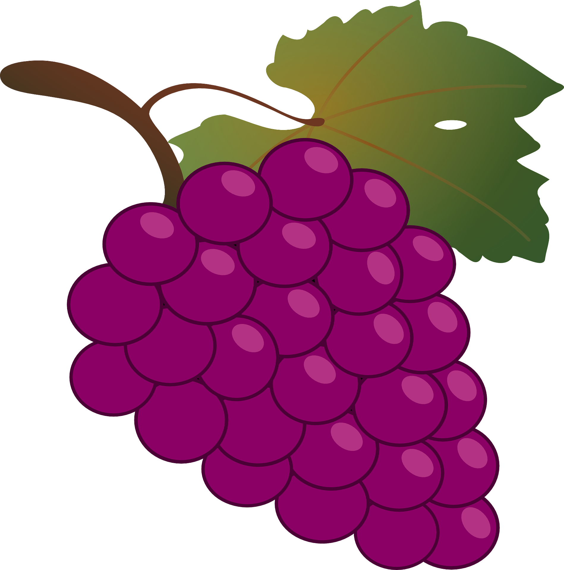 1898x1920 Common Grape Vine Wine Grappa Clip Art