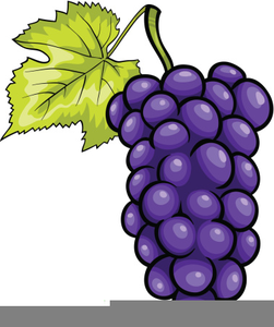 251x300 Purple Grapes Clipart Free Images