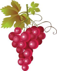 236x294 Red Grapes Cliparts Free Download Clip Art