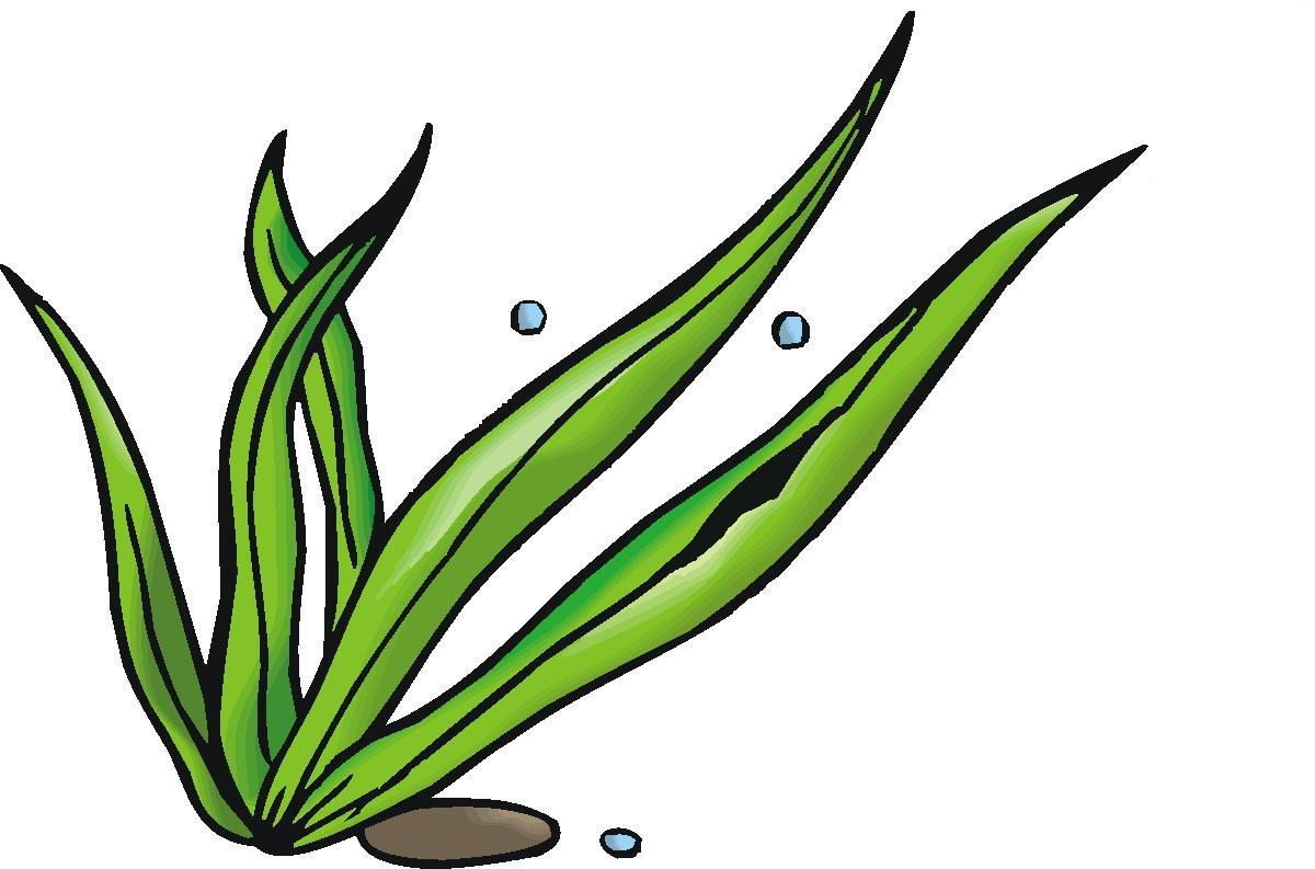 1200x793 Seaweed Clipart Seagrass 3889710