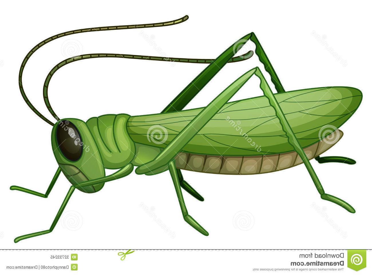 1300x961 Best 15 Grasshopper Clipart Jump Pictures