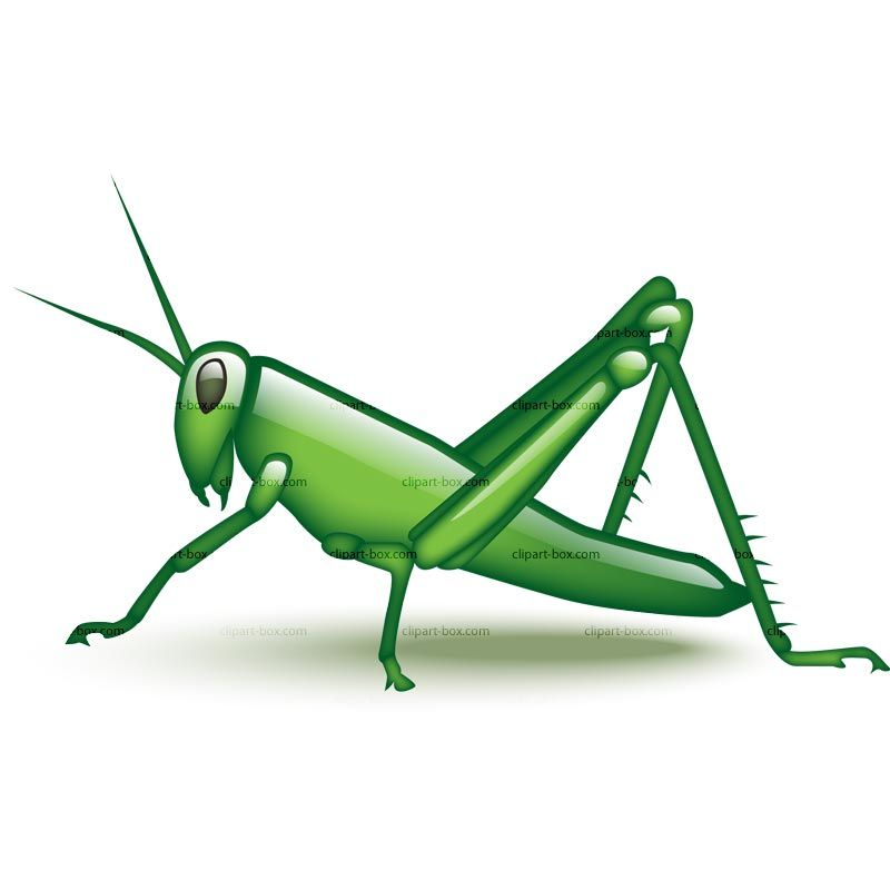 800x800 Grasshopper Clip Art Camp Ideas Clip Art, Clipart