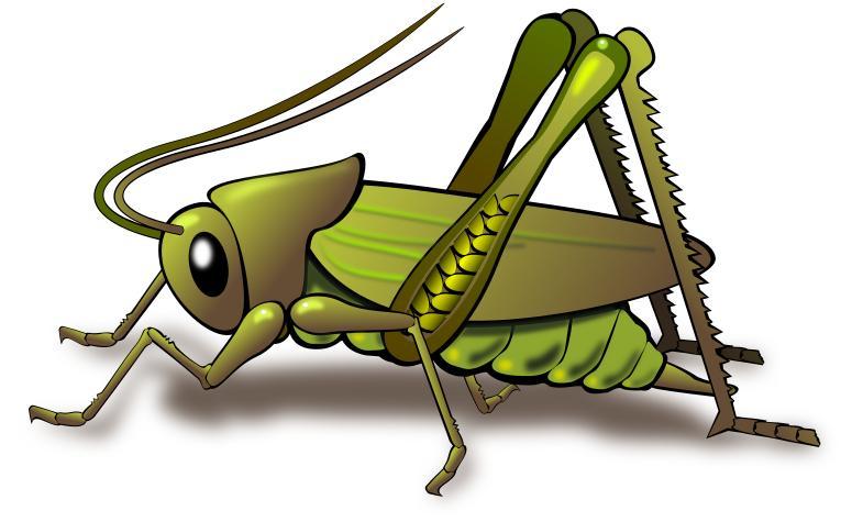 775x475 Grasshopper Clipart