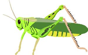 300x189 Grasshopper Locust Clip Art Free Vector 4vector