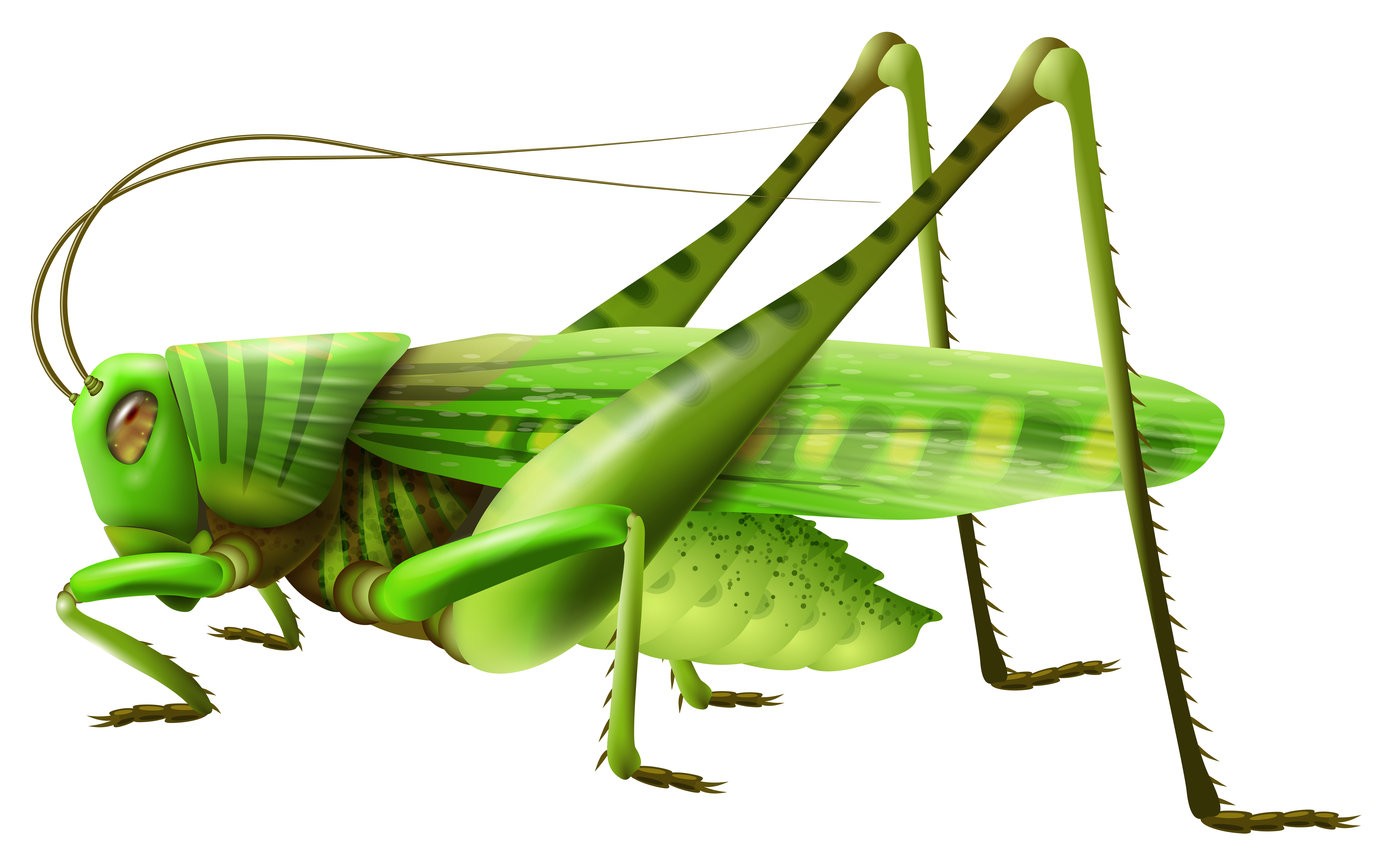 8000x5031 Grasshopper Png Clip Art