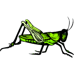 300x300 Grasshopper Clip Art Free Clipart Images Wikiclipart