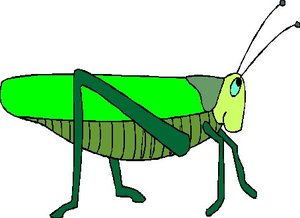 300x218 Grasshoppers Animal Graphics