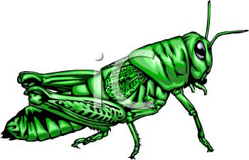 350x225 Nice Grasshopper Clip Art Clip