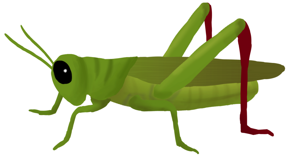 1000x525 Download Grasshopper Png Clipart 182