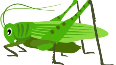 grasshopper clipart at getdrawings com free for personal use rh getdrawings com grasshopper clip art free images grasshopper clip art for kids