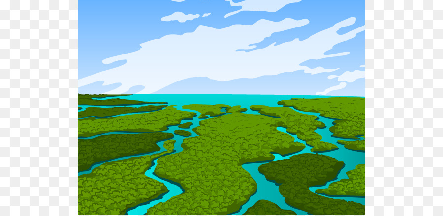900x440 Everglades Pantanal Wetland Ecology Clip Art