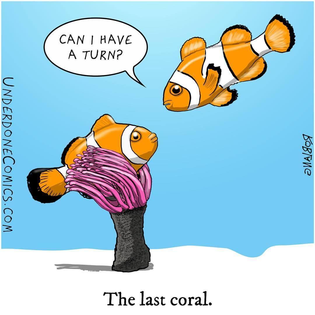 1080x1080 Global Asia Blog The Faith Of Coral Reefs The Faith Of Humankind